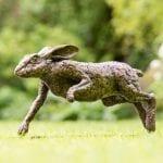 Male Hare