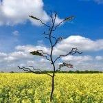 Oak of Youth oak tree sculpture by sculptor Mark Reed